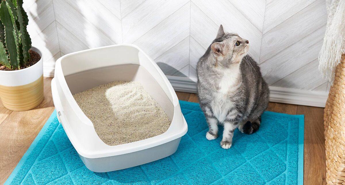 گربه کنار ظرف خاک بدون سقف