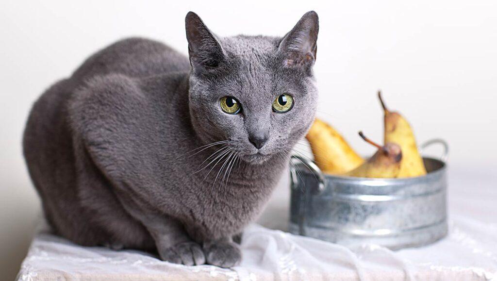 گربه و ظرف گلابی