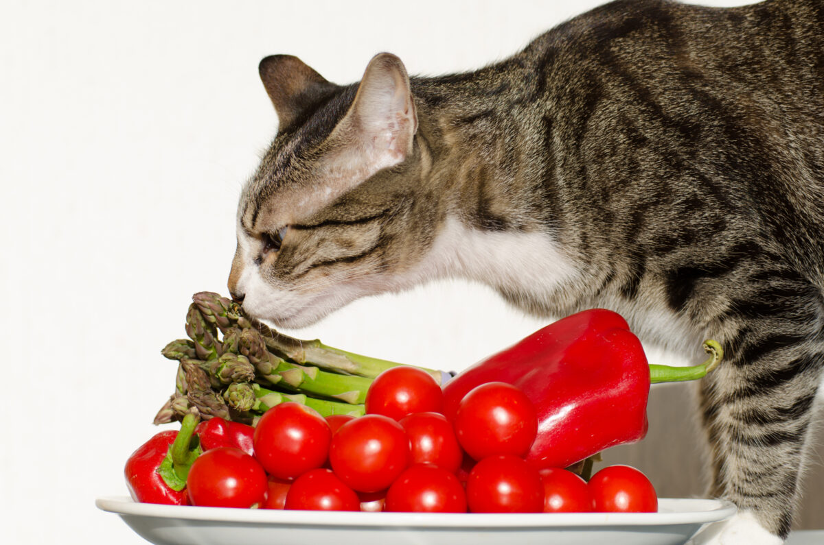 سبزیجات مجاز برای گربه