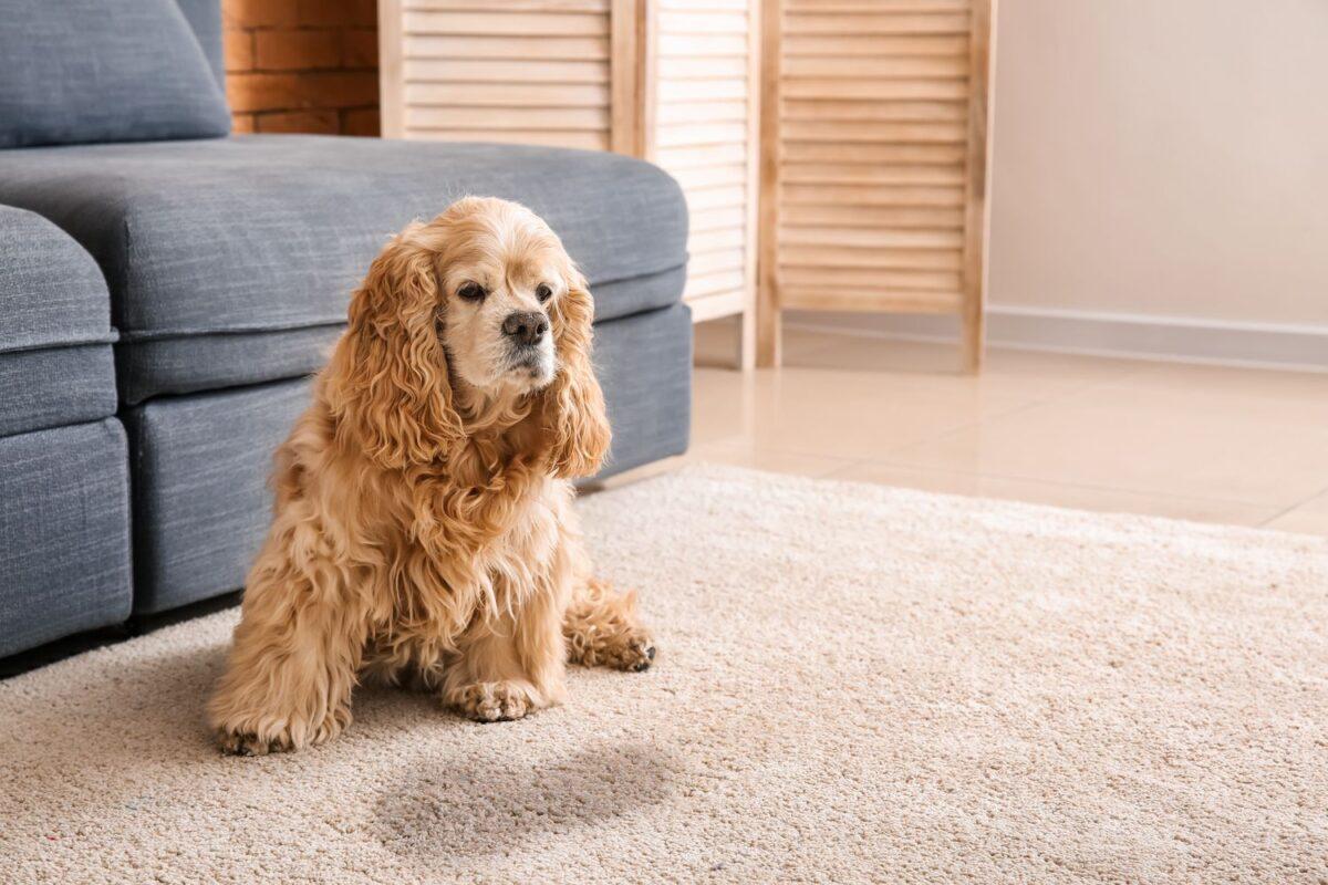 ادرار کردن سگ روی فرش