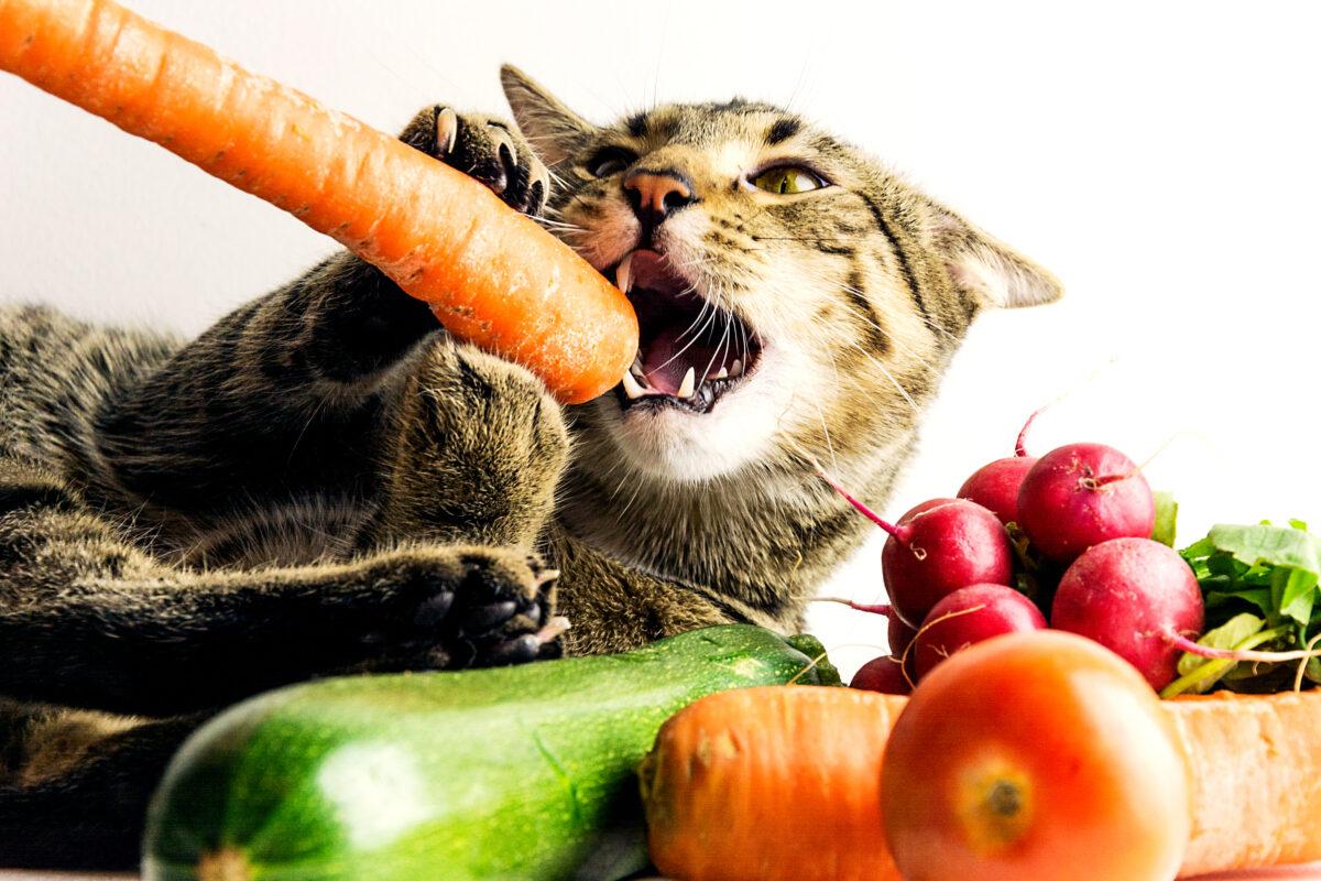 سبزیجات و میوههای مناسب برای گربهها