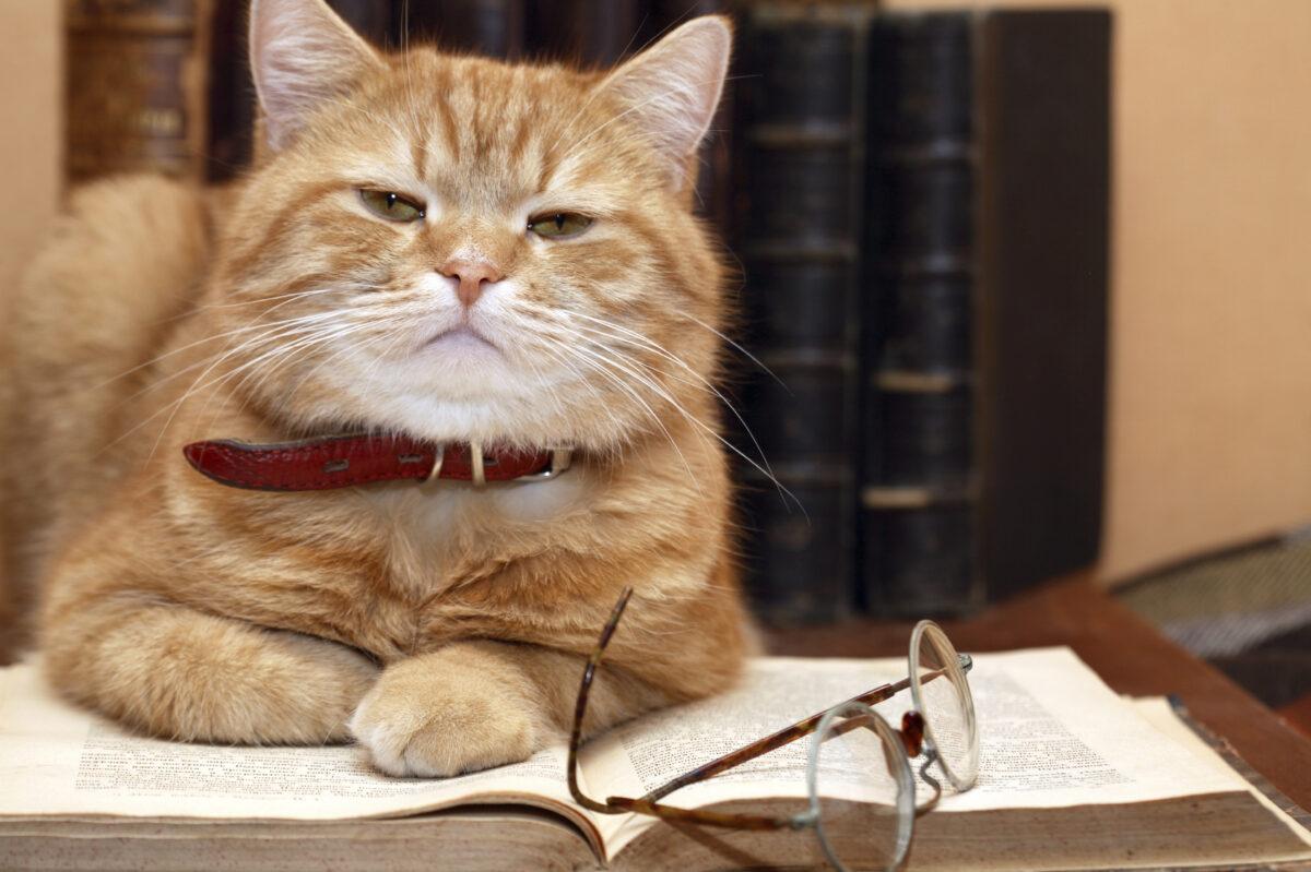 راهنمای آموزش و تربیت گربه خانگی + نکات مهم!