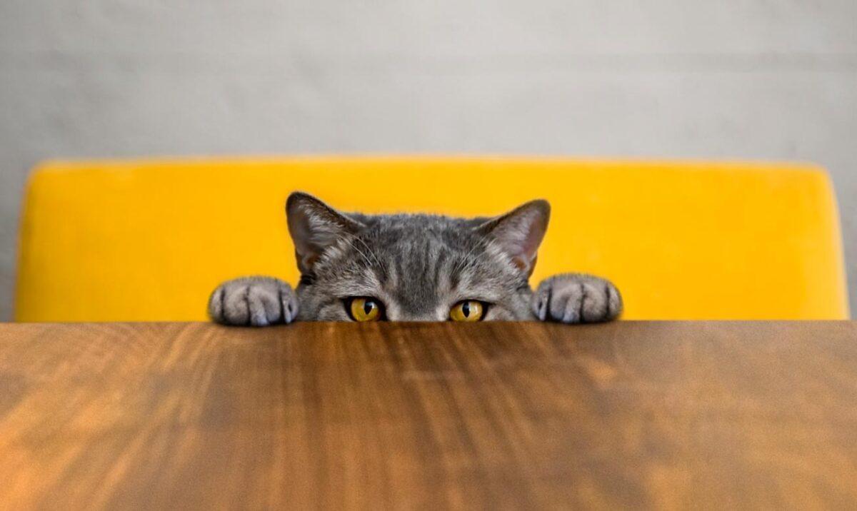 آموزش گربه