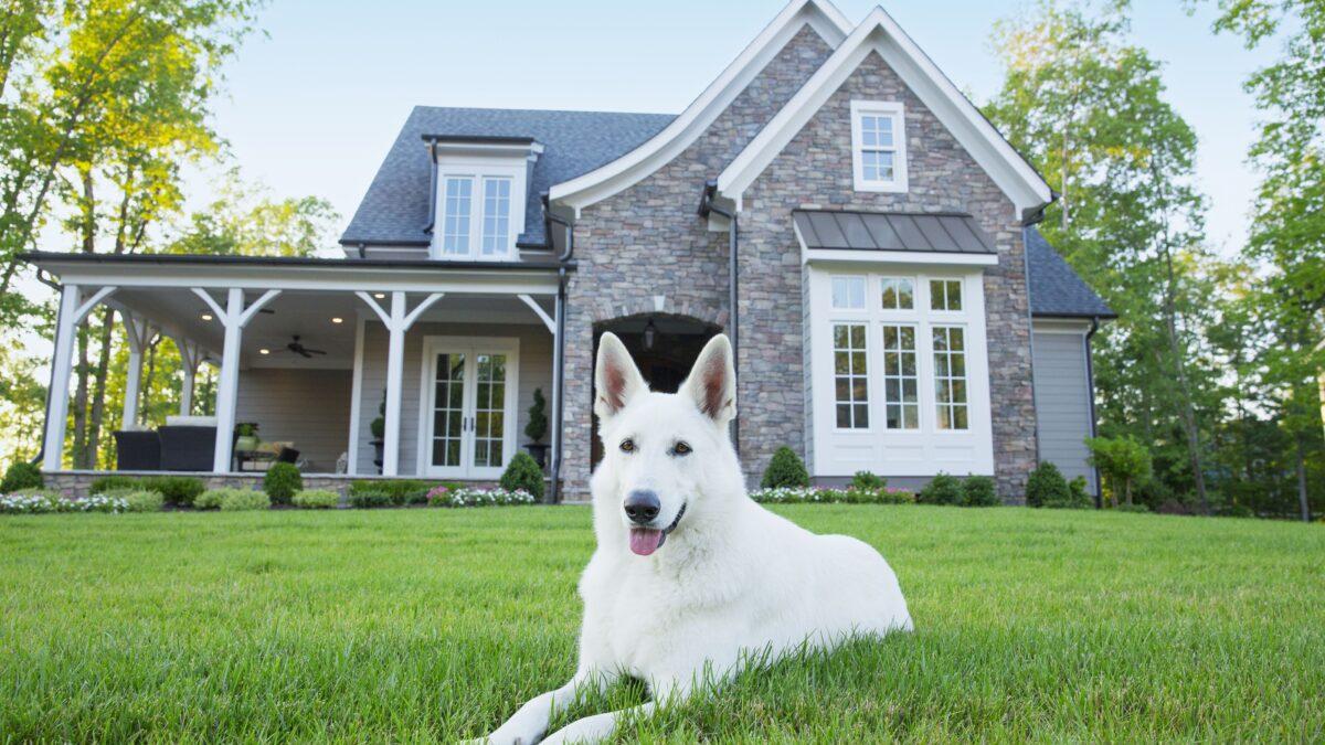 سگ سفید در حال نگهبانی از خانه ویلایی
