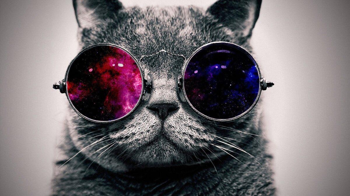 عکس گربه با عینک دودی