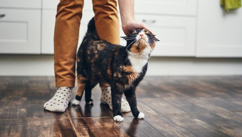 ابراز علاقه گربه به صاحبش
