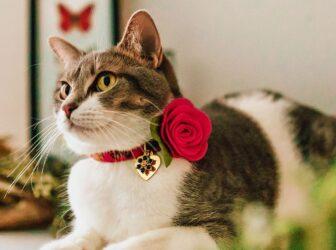 راهنمای خرید قلاده گربه و پلاک هویتی