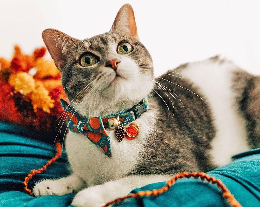خرید قلاده گردنی گربه پاپیون دار