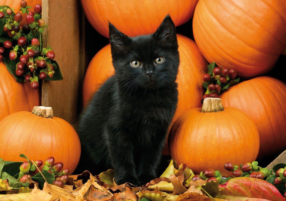 اسم برای گربه سیاه