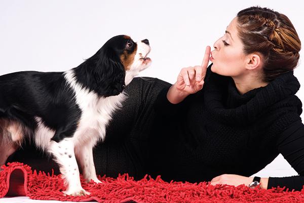 آموزش پارس نکردن به سگ