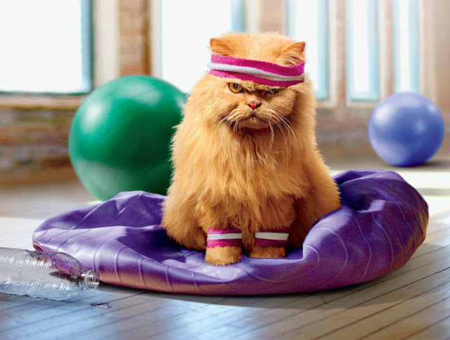 ورزش کردن گربه