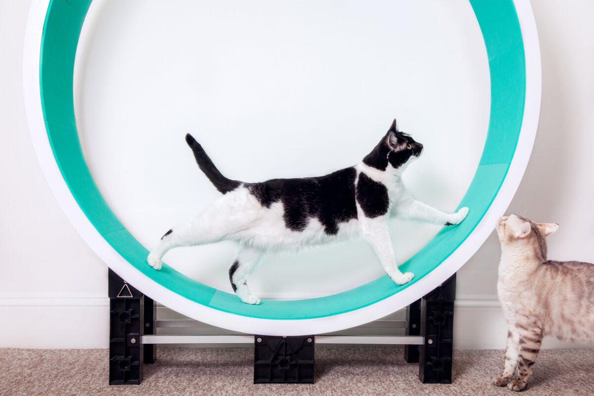 تردمیل گربه