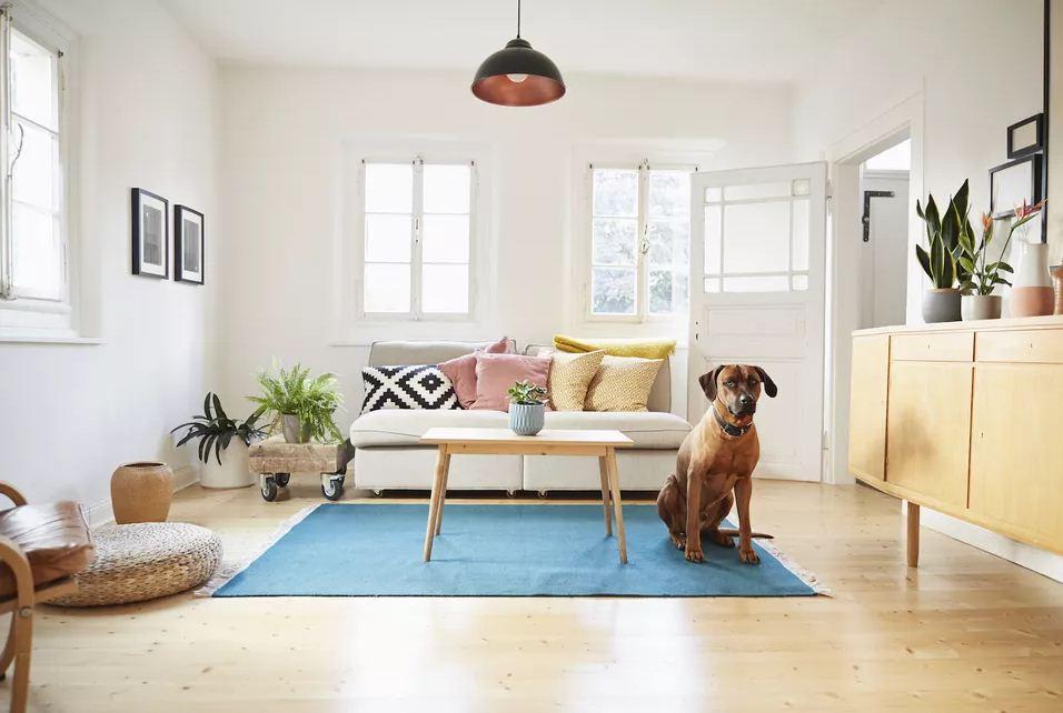 بازی با سگ در خانه