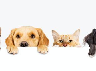 بیمه حیوانات خانگی ( سگ + گربه + پرندگان تزئینی)