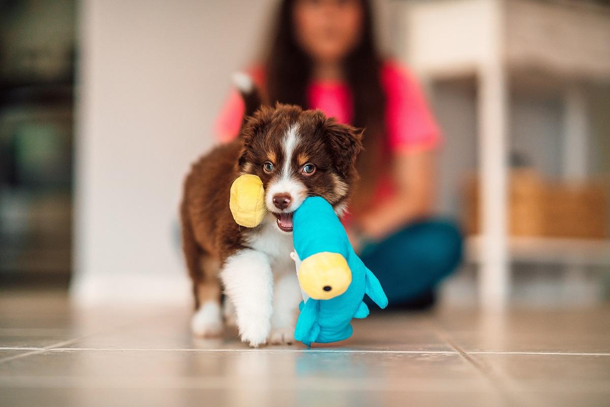 تخلیه انرژی سگ با بازی