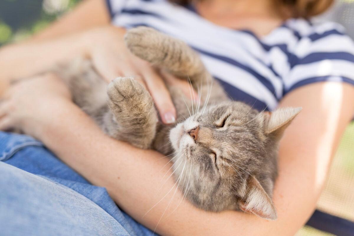 ارتباط و دوستی با گربه