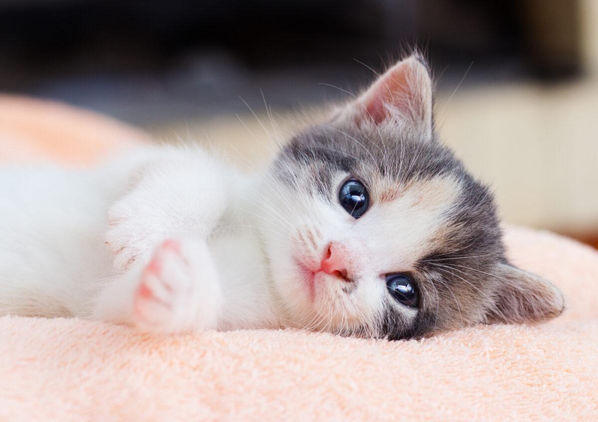 اسم برای بچه گربه