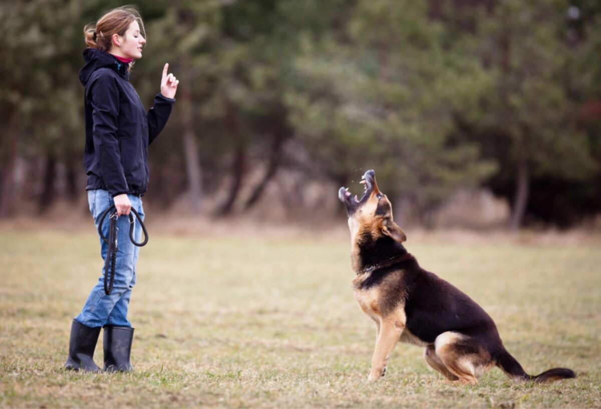آموزش پارس کردن به سگ ژرمن شپرد