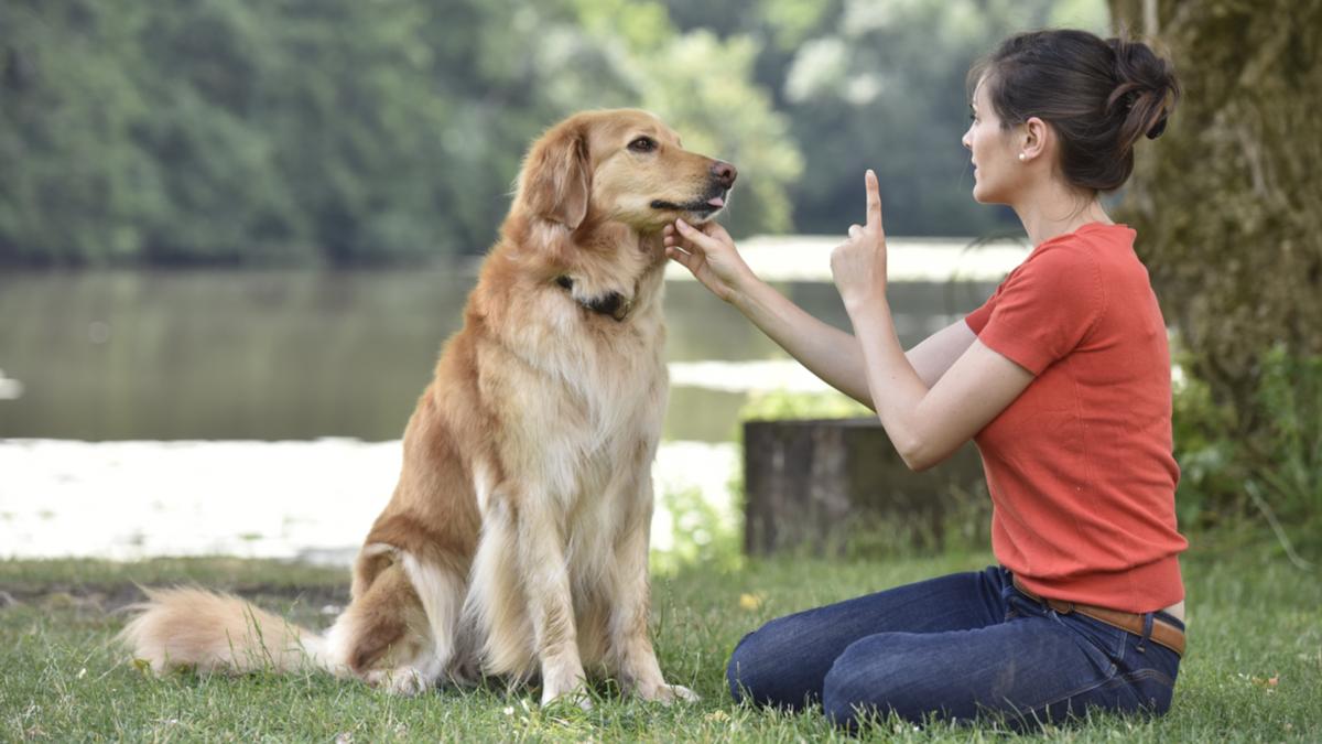 یاد دادن پارس کردن به سگ