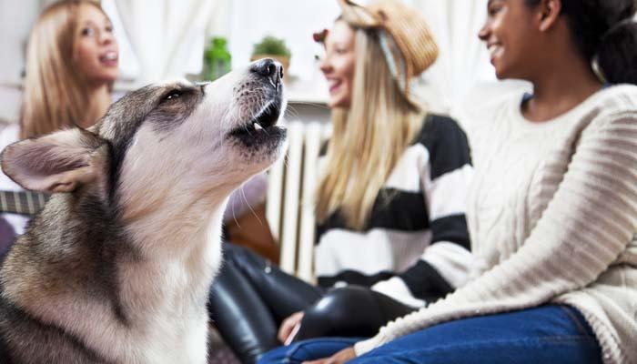آموزش حرف زدن به سگ