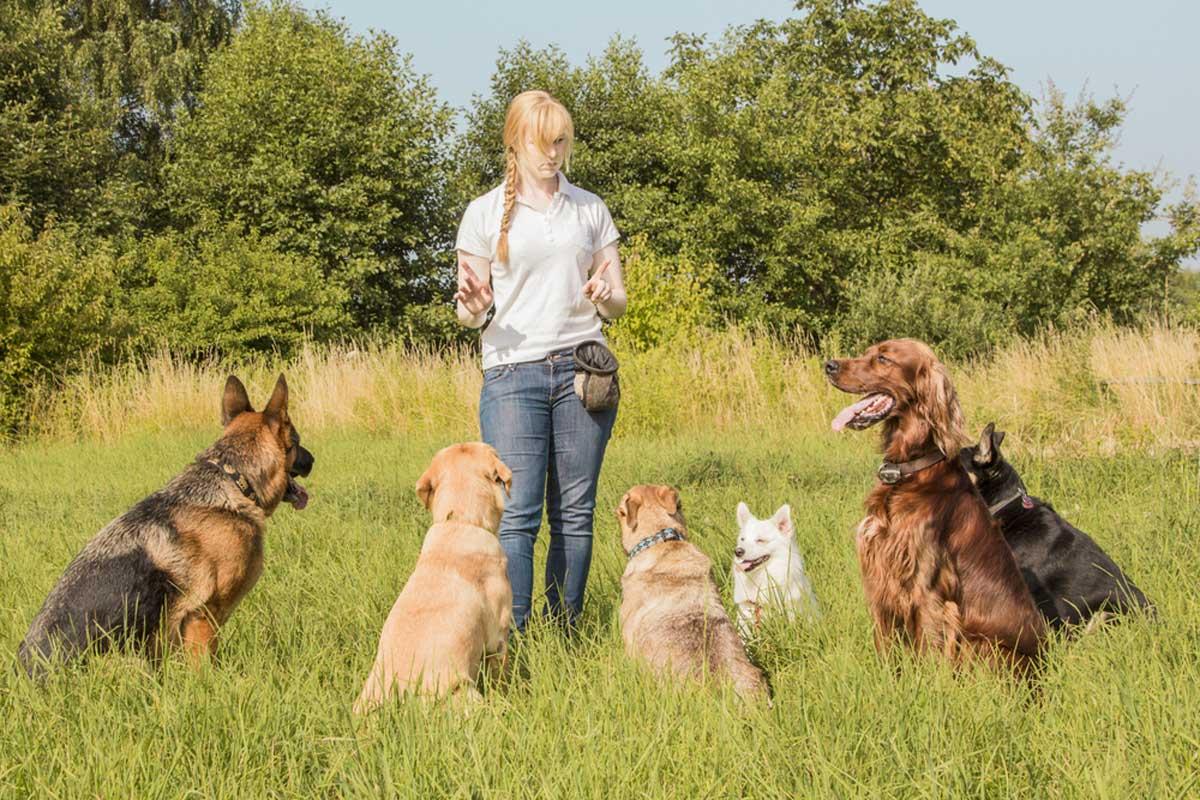 مربی زن در حال آموزش سگها