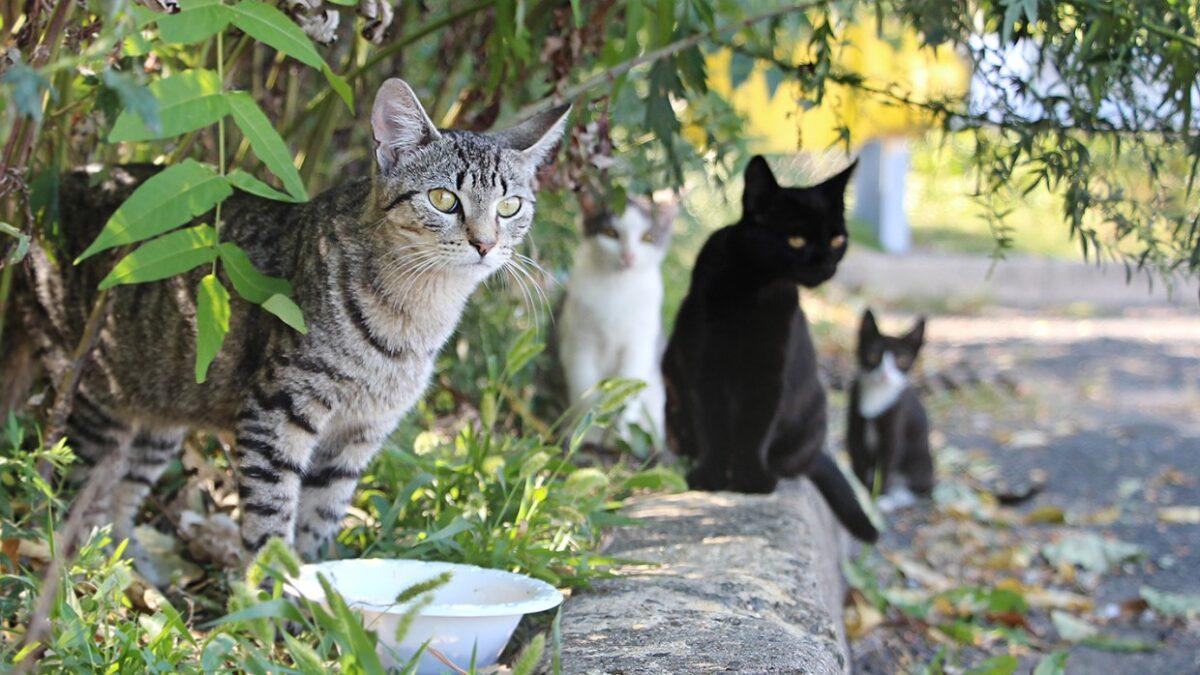 دوست شدن با گربه های خیابانی