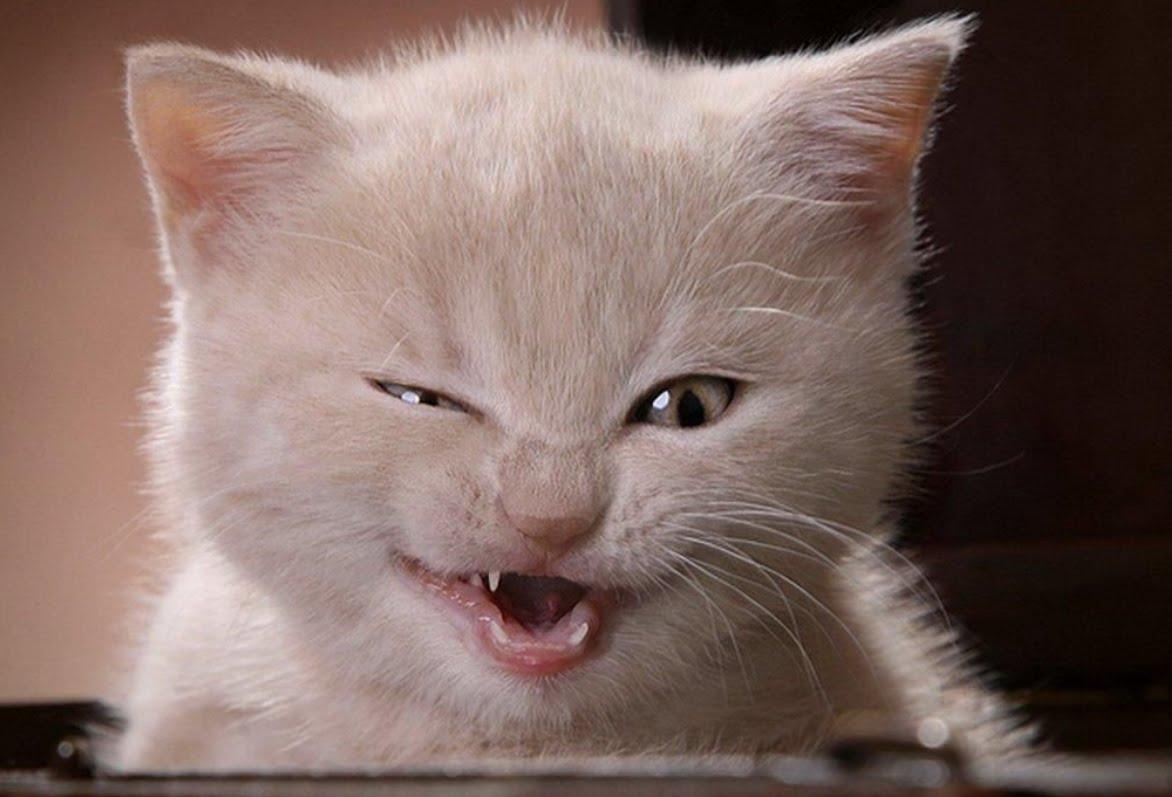 عکس گربه بانمک و شیطون