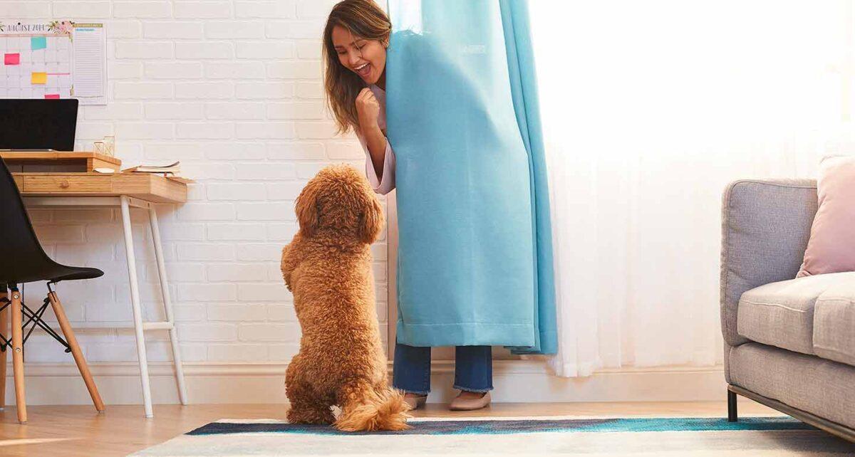 روش تخلیه انرژی سگ در خانه + آموزش بازی های جذاب