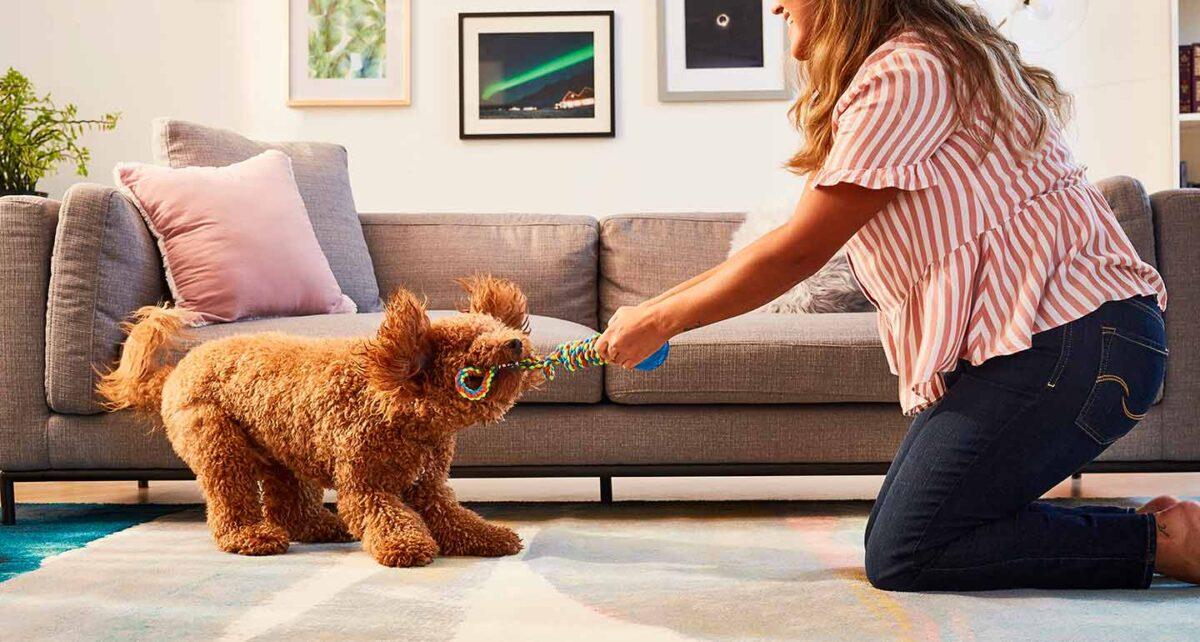 سگ در حال بازی تاگ یا کشیدنی