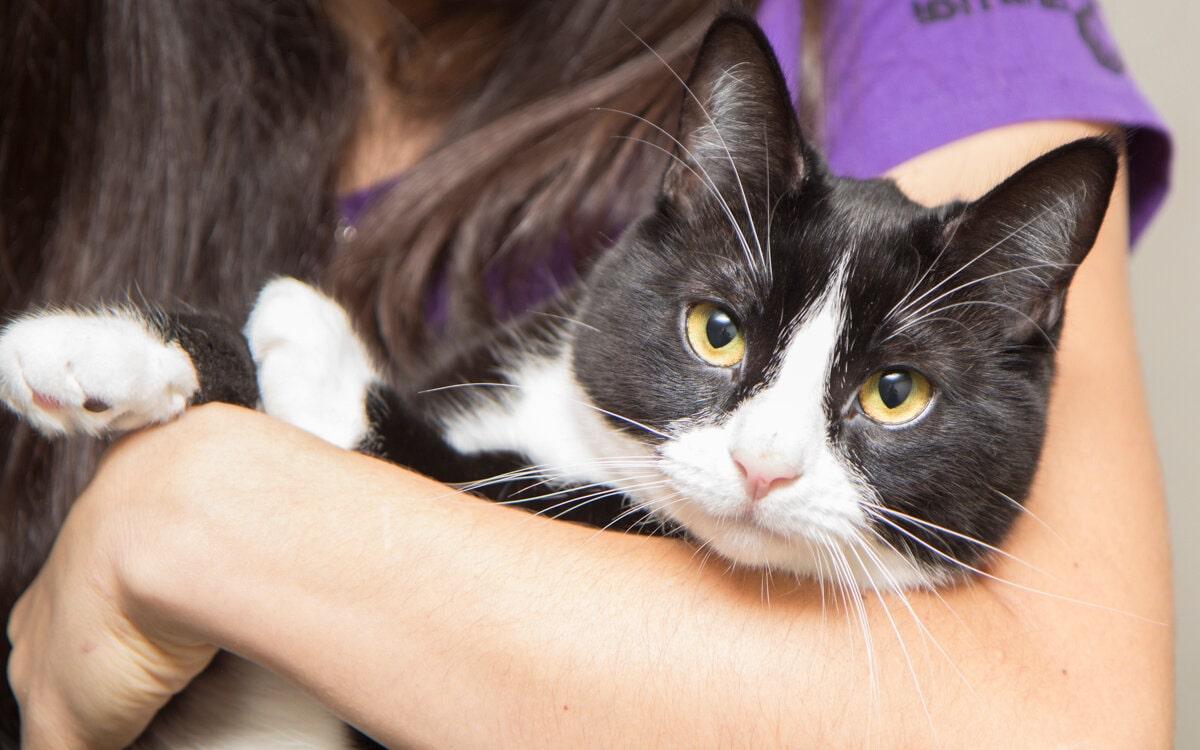 گربه سیاه سفید در بغل صاحبش