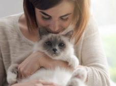 مراحل دوستی با گربه از جلب اعتماد تا عاشق کردن!