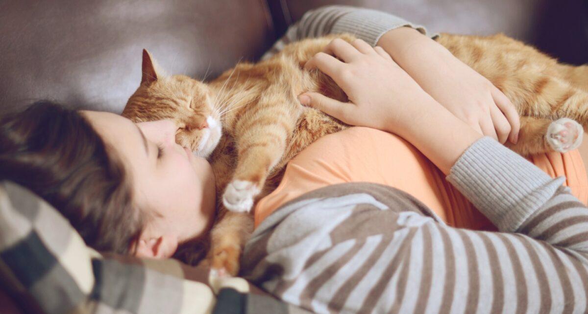 چگونه گربه را عاشق خود کنیم