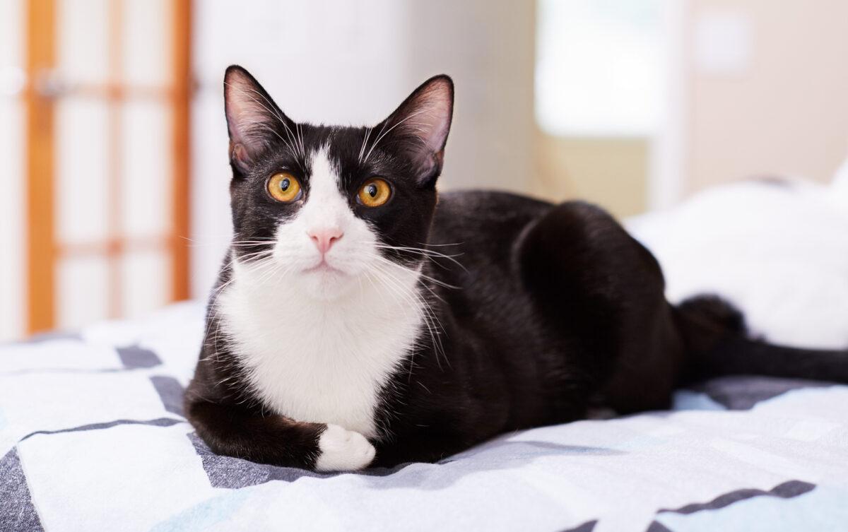 اسم برای گربه سیاه و سفید