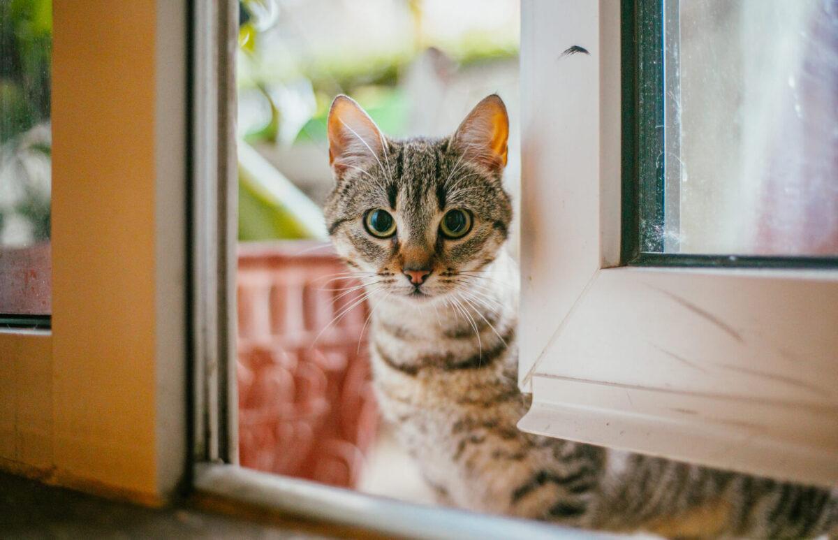 اهلی کردن گربه خیابانی