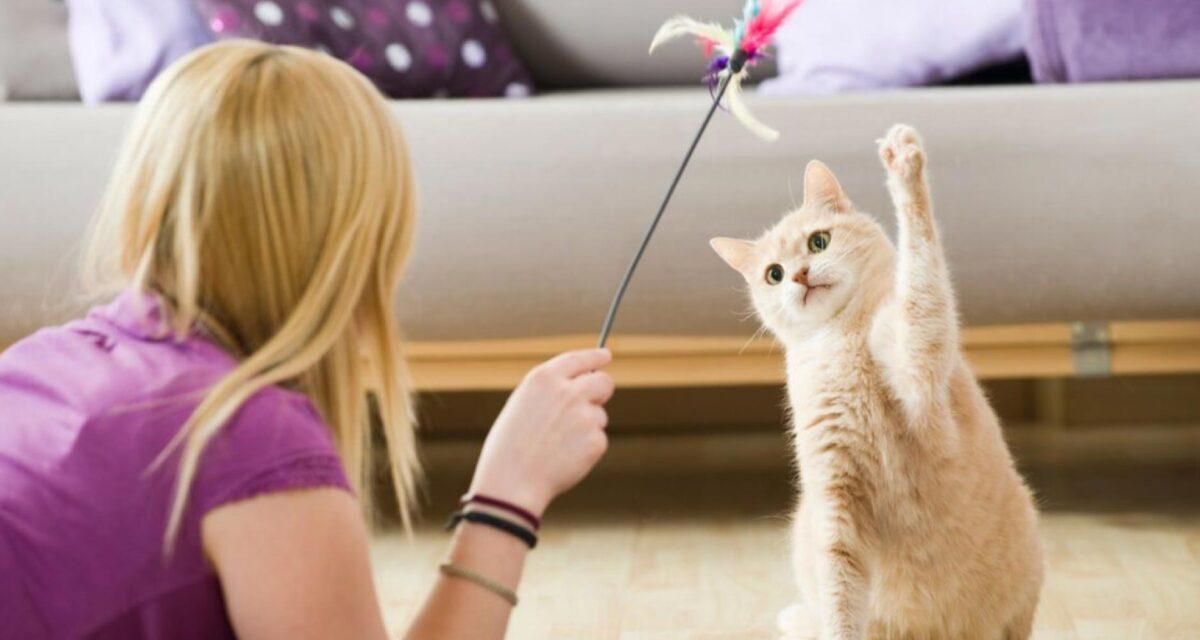 بازی کردن با گربه