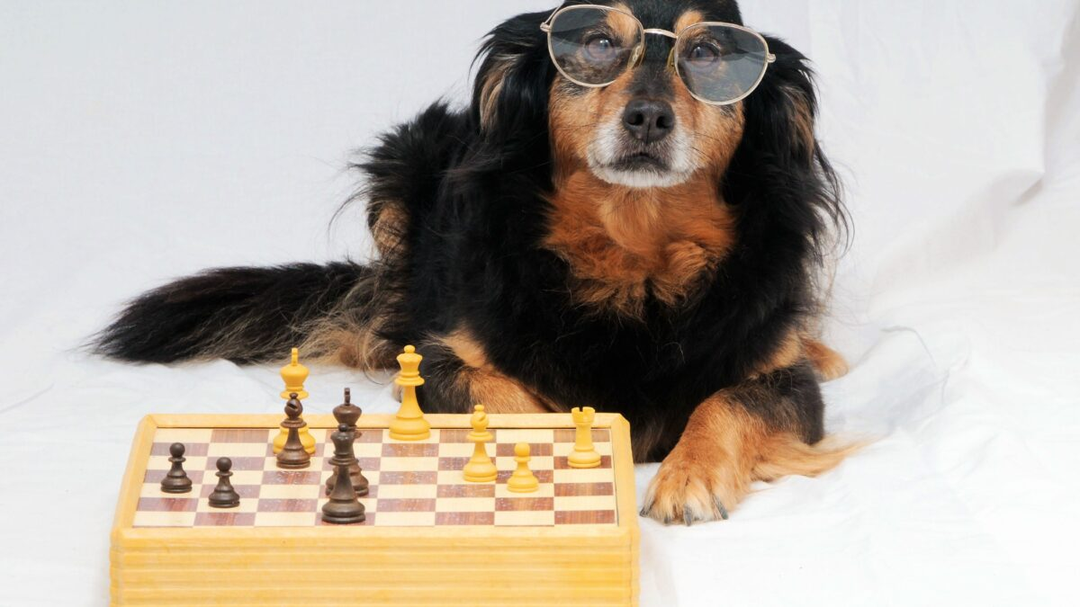 بازی فکری برای تخلیه انرژی سگ