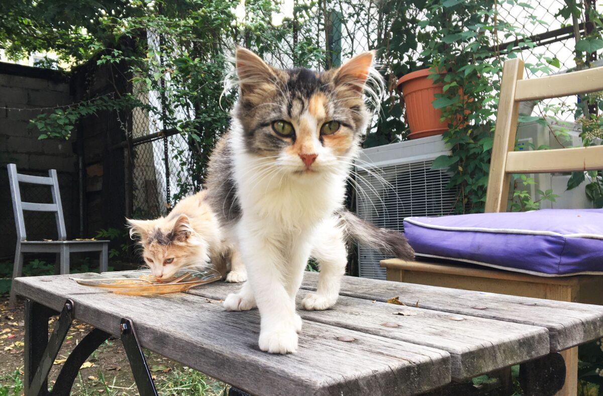 جلب اعتماد گربه خیابانی
