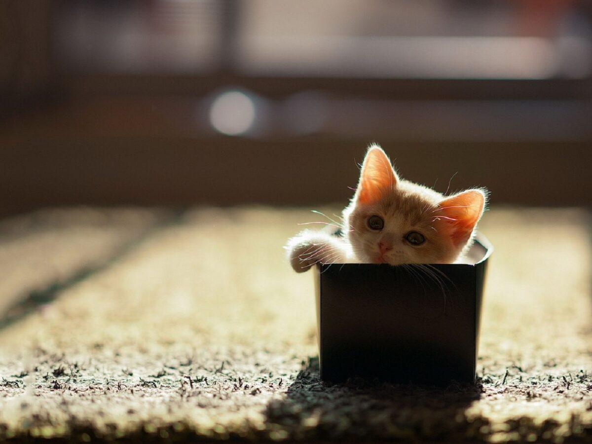 نگهداری از بچه گربه خیابانی