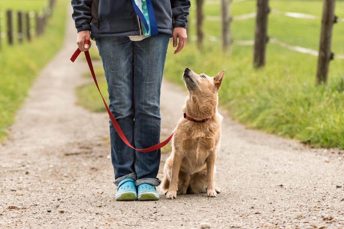 سگ در حال پیاده روی با صاحبش
