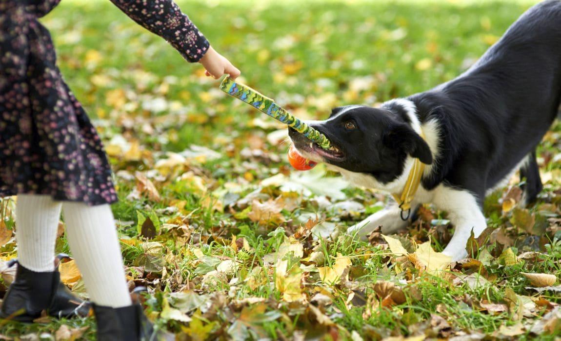 اموزش قوانین بازی به سگ