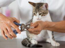 روش صحیح گرفتن ناخن گربه – آموزش مرحله به مرحله
