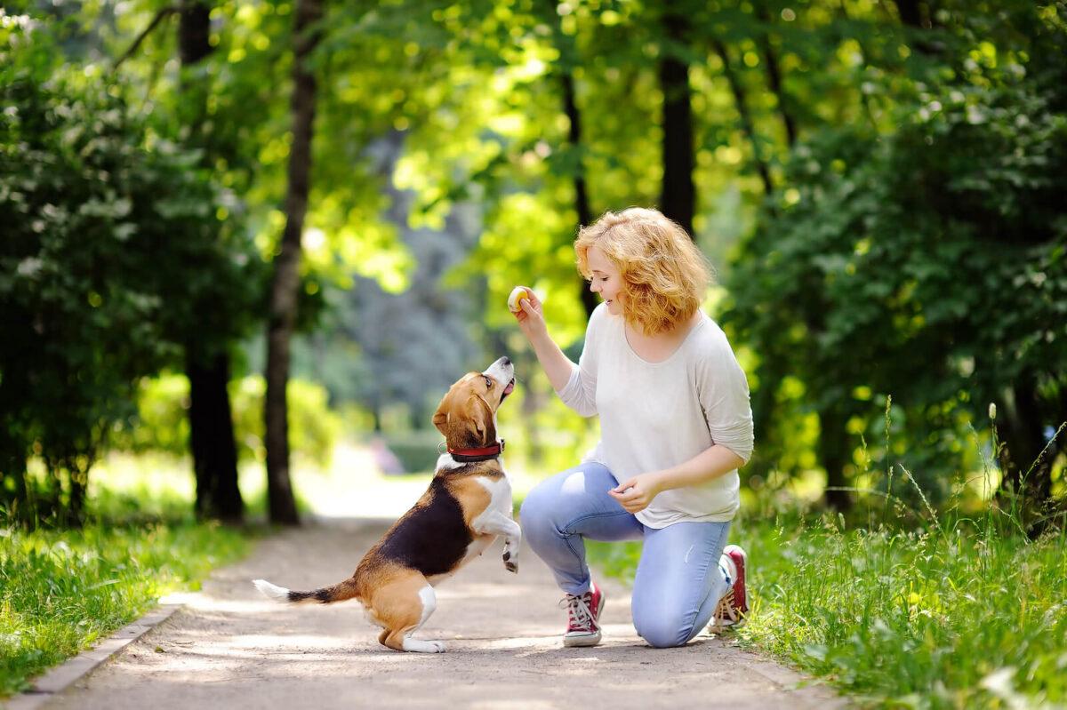 زن در حال بازی با سگ در پارک