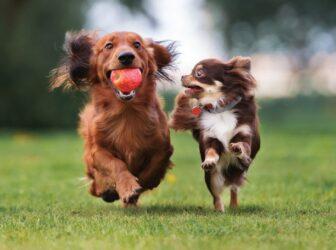 شیوه بازی کردن با سگ و آموزش چند نوع بازی محبوب!