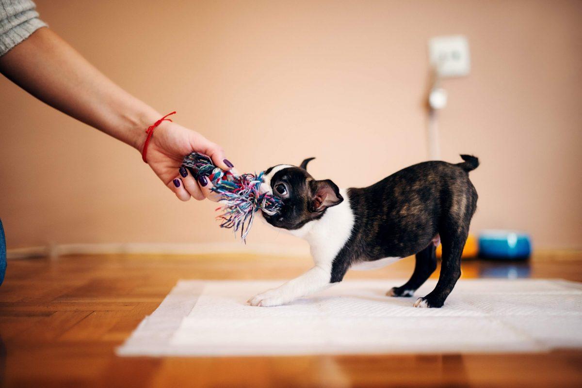 بازی تاگ با سگ