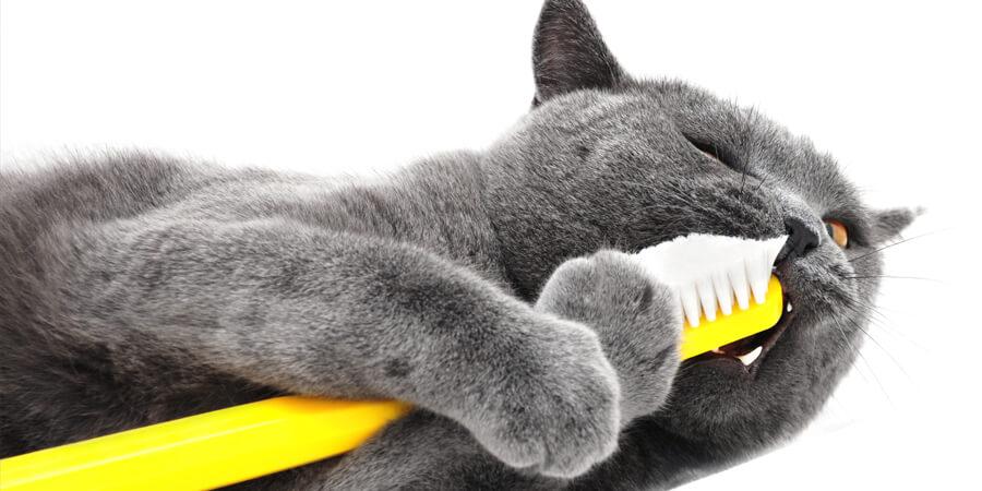 یک گربه در حال مسواک زدن با مسواک زرد رنگ