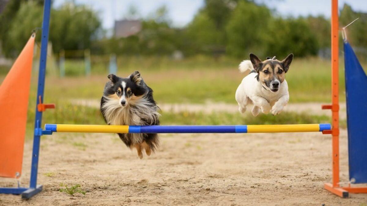 آب بازی دو سگ در استخر