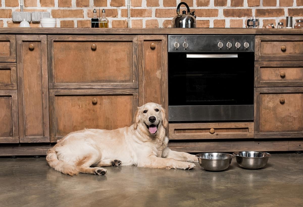 ظرف غذای اتوماتیک سگ