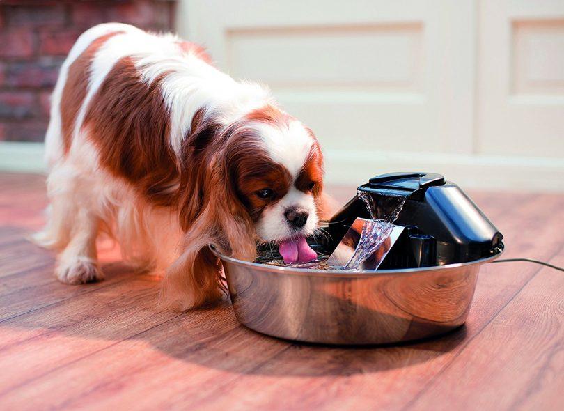 آبخوری اتوماتیک سگ هوشمند