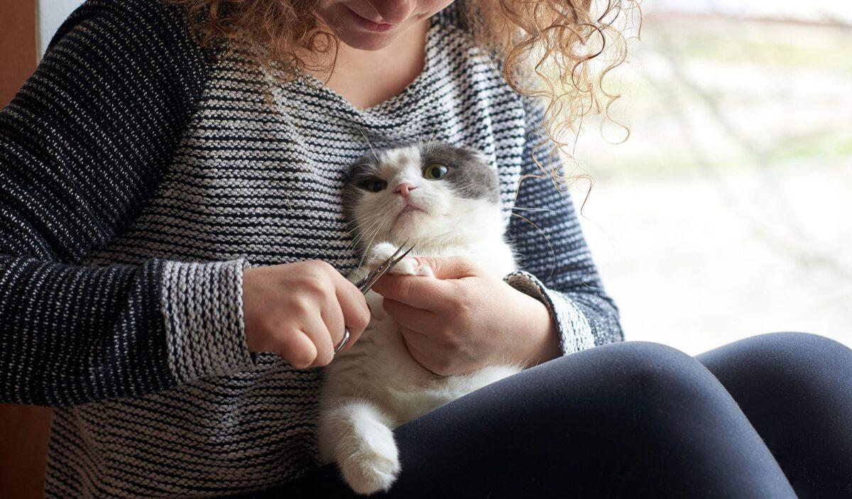 گرفتن ناخن گربه در منزل