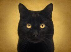 رایجترین خرافات و باورهای اشتباه در مورد گربه ها